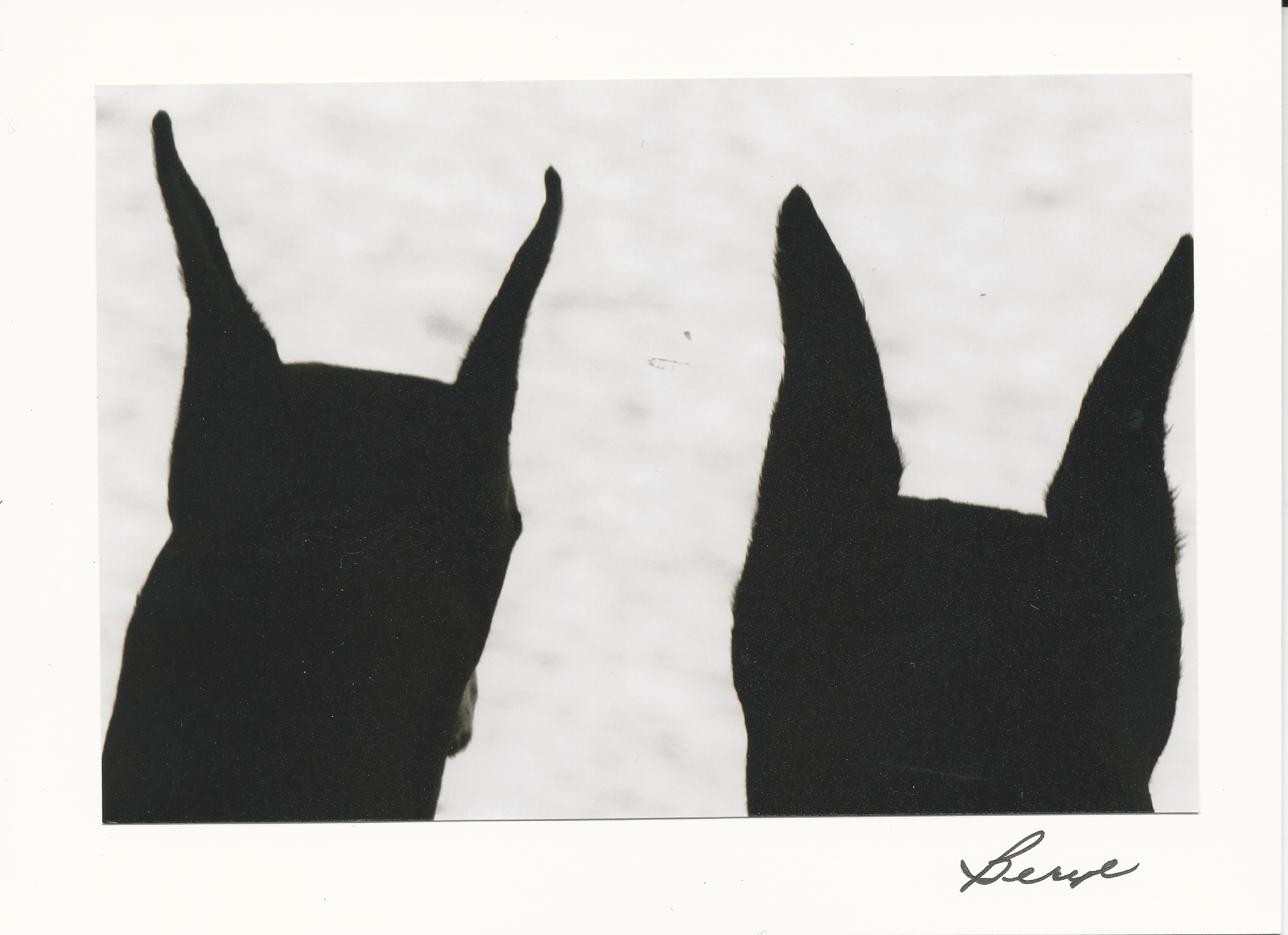 Beryl's  ears card